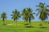 Beautiful view of natural tropical meadow field and fluffy palm trees against blue sky background — Stock Photo