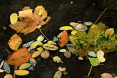 Autumn leaves in the water — Stock Photo
