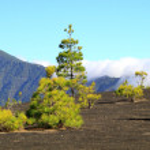 Постер, плакат: National Park Caldera de Taburiente in La Palma