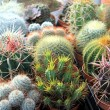 Collection of small cacti — Stock Photo #61236101