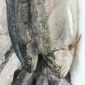 Fischen — Stockfoto