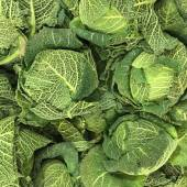 Savoy Cabbages — Stock Photo
