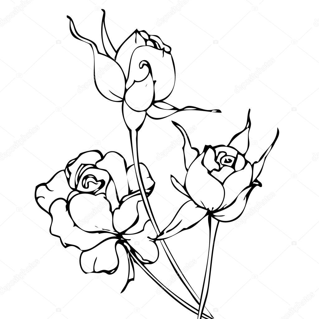 Dibujo de rosas blancas y negras a mano Vector — Vector de stock ...