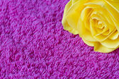 Beautiful yellow rose on a pink towel — Stock Photo