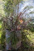 Galhos de árvores, queimando em um incinerador de lixo — Fotografia Stock