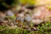En el bosque de setas en otoño — Foto de Stock