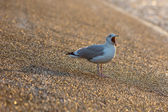 Seagull at the seafront at sunset — Stock Photo