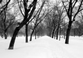 City park with snow — Stock Photo