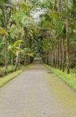 Beautiful botanic garden of Furnas — Zdjęcie stockowe