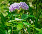 Flores na ilha de são miguel — Fotografia Stock