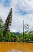 Beautiful botanic garden of Furnas — Stock Photo