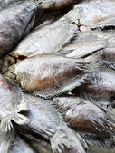 Dried Salted Fish — Stock Photo