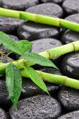 Bamboo on the stones for spa — Stock Photo