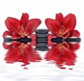 Czerwony lilie z kamieni bazaltowych — Zdjęcie stockowe