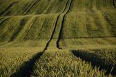 недалеко от города - сельского пейзажа - область — Стоковое фото