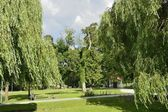 Green parks in Poland — Stock Photo