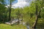 Bridge over green pond — Stock Photo
