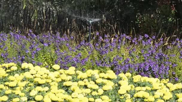 Regando las flores. — Vídeo de stock