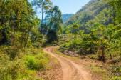 Camino en el bosque. — Foto de Stock