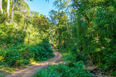 Road in forest. — Stock Photo