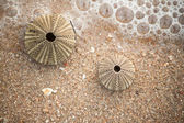 Barnacle on beach. — Stock Photo