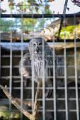 Owl at the zoo — Stockfoto