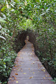 Dřevěný most přes mangrovových zalesňování v Petchaburi — Stock fotografie