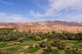 Beautiful oasis in Tineghir,Morocco — Stock Photo