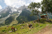 Beautiful view of Sonamarg in Kashmir,India — Stock Photo