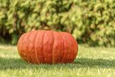 Red pumpkin in autumn — Stock Photo