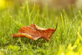 Lonely leaves on grass — Stock fotografie