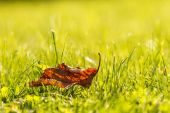 Lonely leaves on green grass — Stock Photo