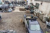 Dog in Auto dump — Stock Photo