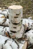 Thin birch — Stock Photo