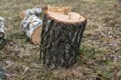 Vecchio ceppo di albero — Foto Stock