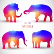 Set Colorful Geometric Silhouettes of Elephant — Stock Vector