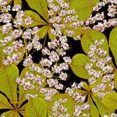 Blossom kastanje naadloze voorjaar achtergrond — Stockvector