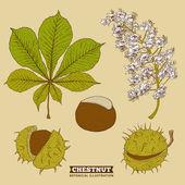 ブロッサムの栗植物ベクトル図 — ストックベクタ