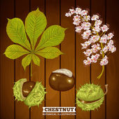 Chestnut Autumn Botanical Vector Illustration — Stock Vector