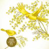 Sprig of Mimosa and Yellow Bird, Spring Background — Vetor de Stock