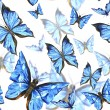 Beautiful blue summer watercolor butterflies on a white background, seamless pattern — Stock Photo #78427886