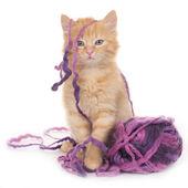 Kitten with wool ball — Stock Photo
