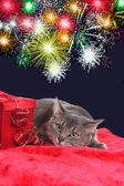 Anxiouis cat with fireworks — Stock Photo