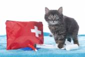 Cute kitten with first aid kit — Stock Photo