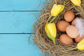 Natural nest with chicken eggs — Stock Photo