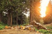 Logging and green forest — Stock Photo
