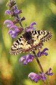 Butterfly on flower close up — Zdjęcie stockowe