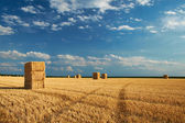 Yellow haystacks in the field — Stock Photo