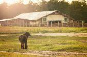 Farm field and black dog — Stock Photo