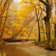 Brook in the autumn forest — Stock Photo #70271821